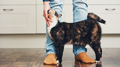 5 Unexpected Benefits of Having a Cat