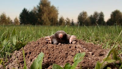7 Mole-Fighting Lessons