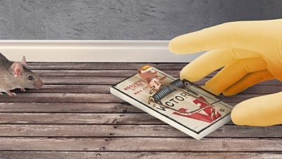 7 Mouse Trap Mistakes You're Making