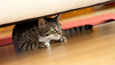 8 Ways Your Cat Tries Telling You About an Invader