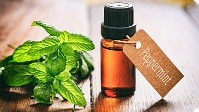 Peppermint Oil Mice Repellent