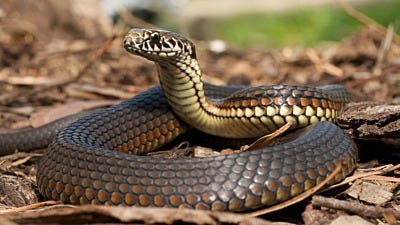 How to Remove Snakes from Your Property