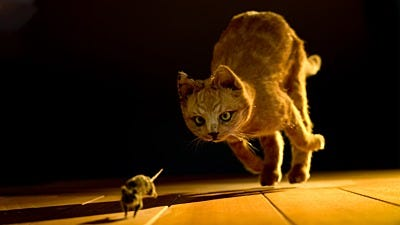 How to Train Your Cat to Hunt Mice
