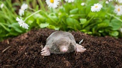 Meet the Mole Expert Stewart Clark