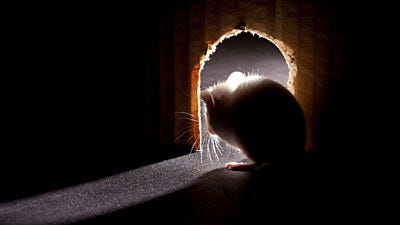 What Does a Mouse Hole Look Like?