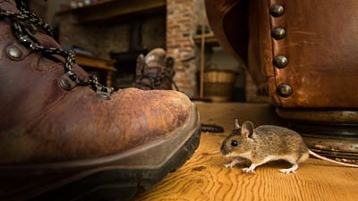 rodent season control and tips