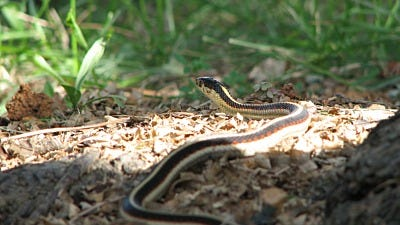 keep snakes off your property