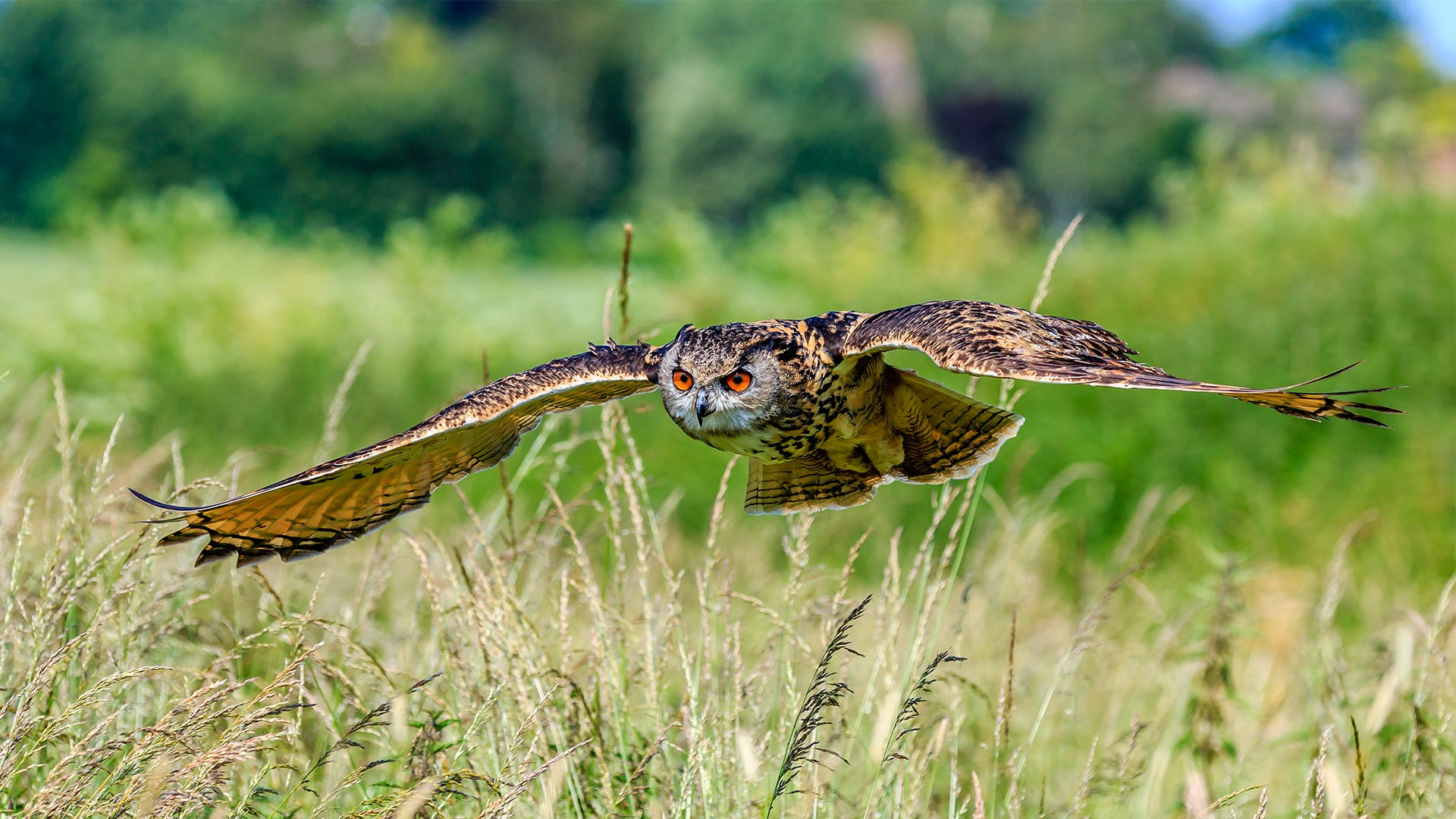 Attracting Owls to Reduce Rodent Populations