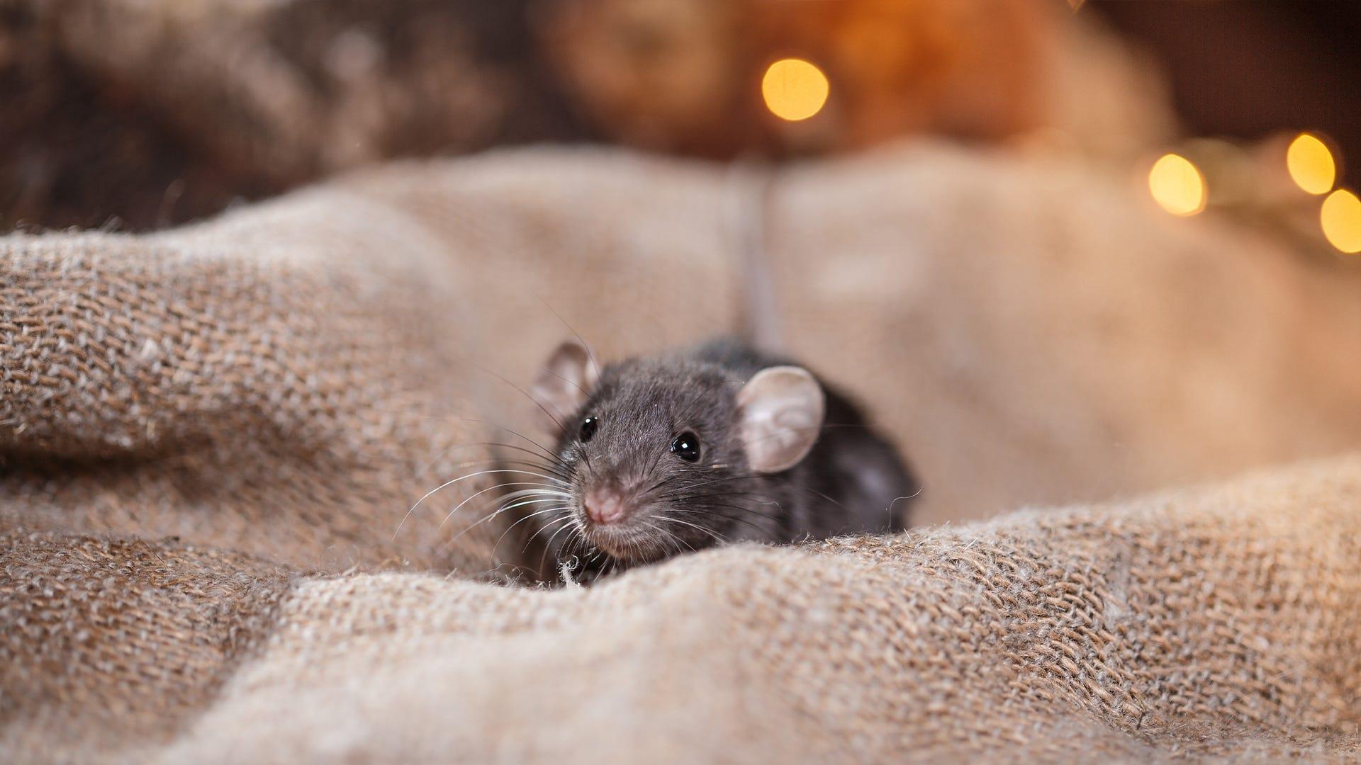 Christmas Mice Aren't Cute
