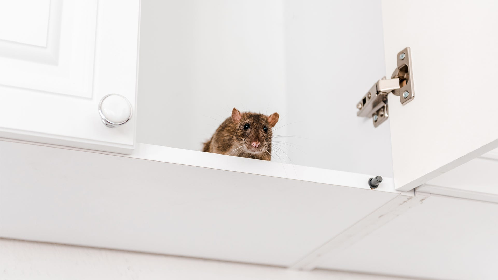 DIY Pest Control - Ban Rodents from Your Home