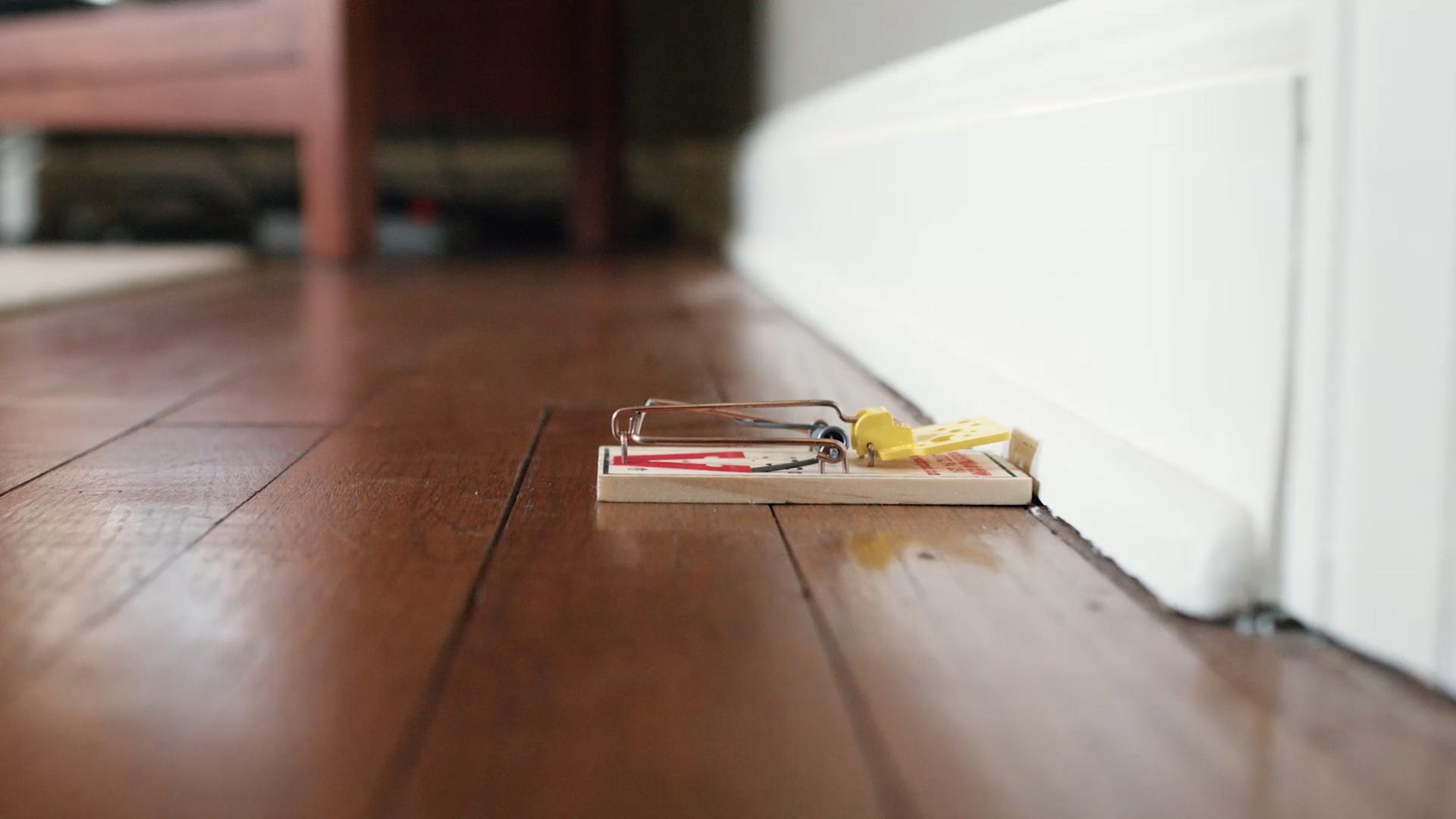Firm vs. Sensitive: Best Tips for Setting Mouse Traps