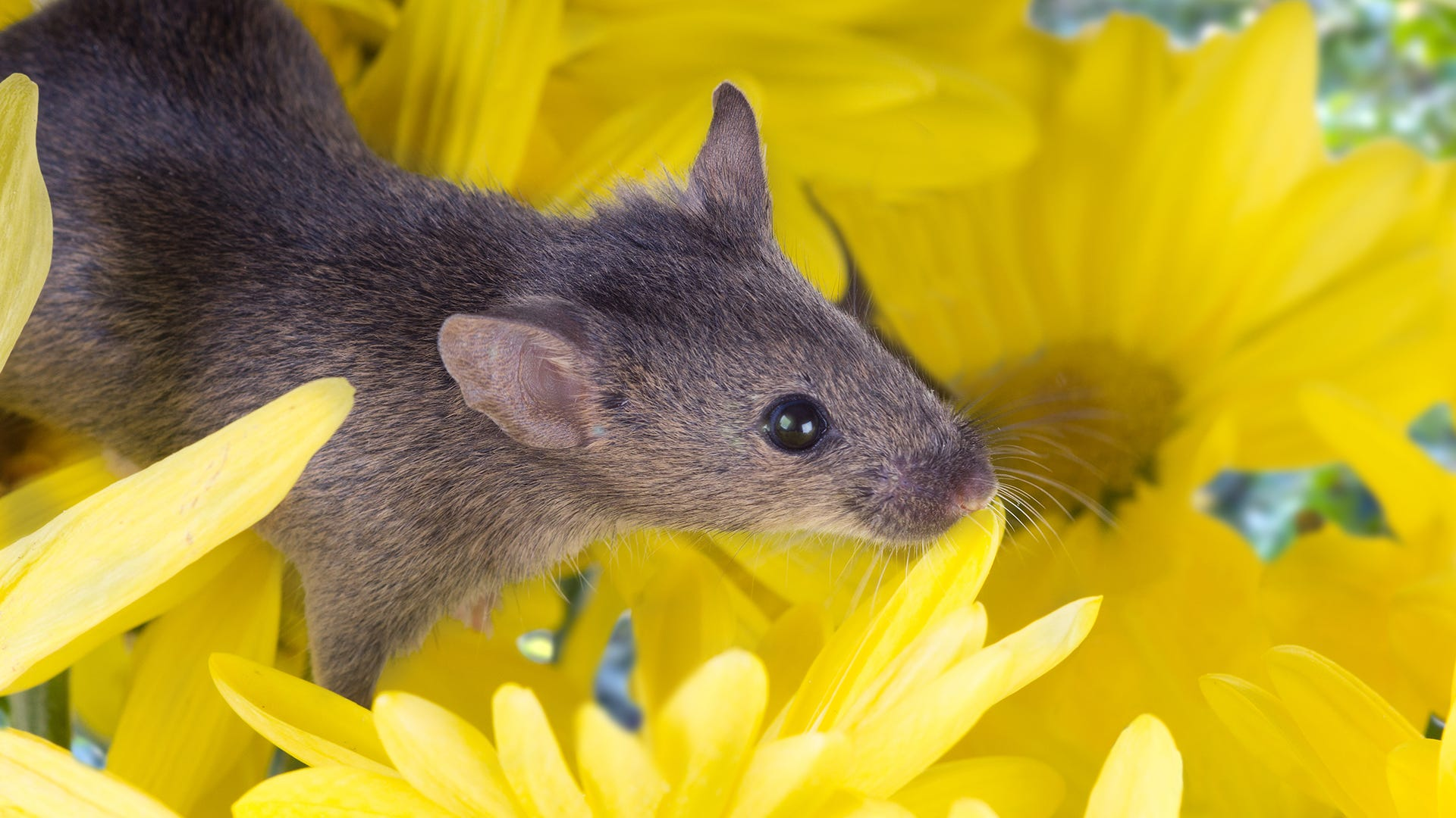 How to Keep Rodents out of the Garden