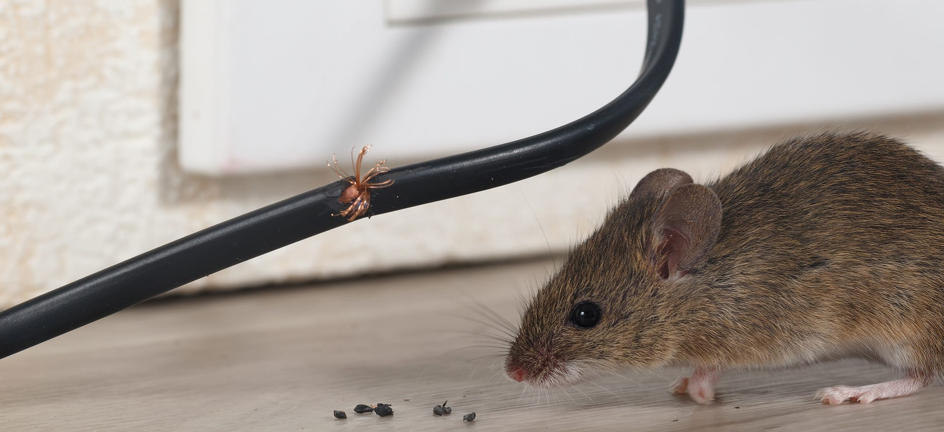 mice chewed wire