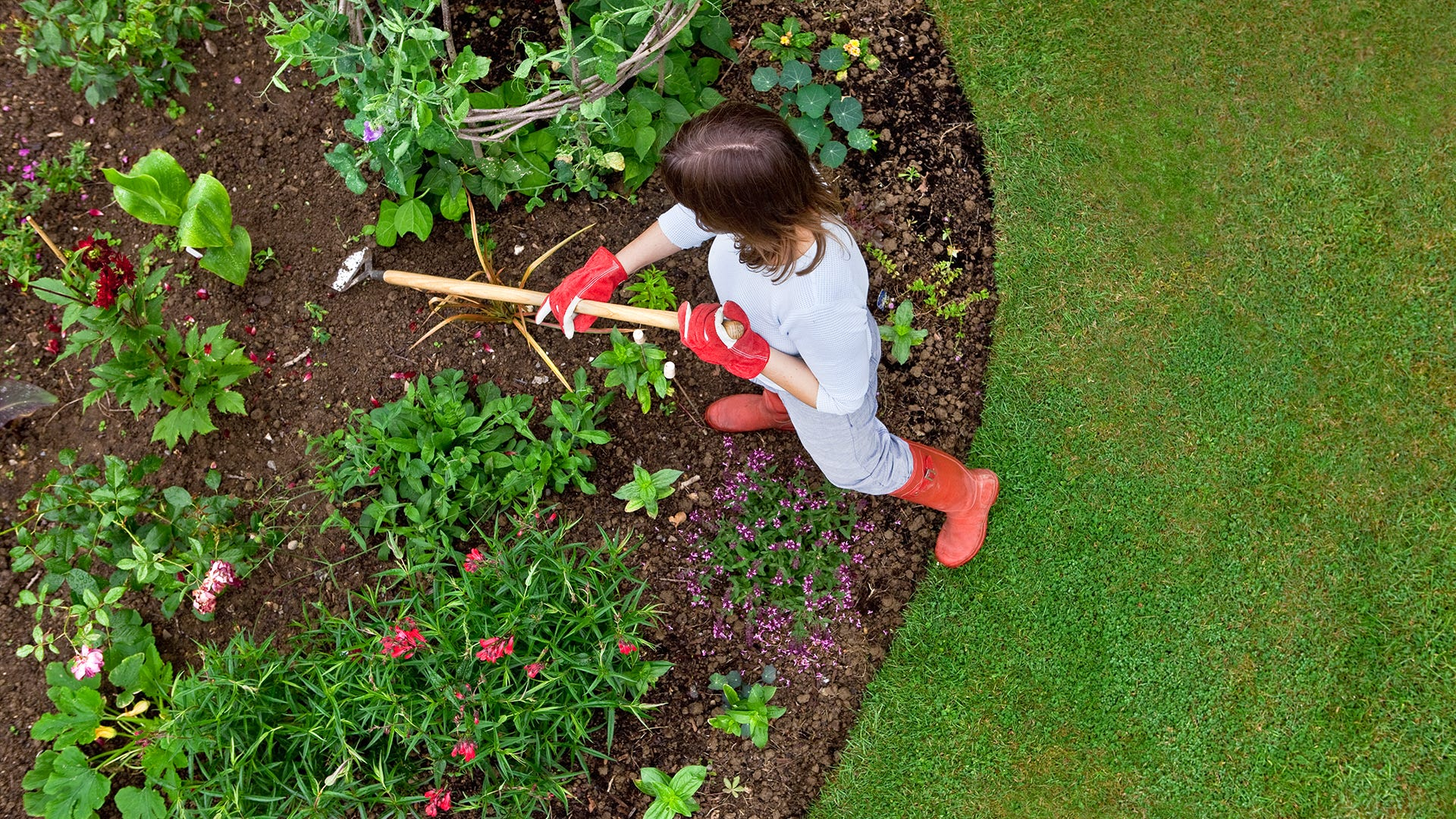 The Best Time to Prepare Your Yard Against Moles, Voles, and Gophers