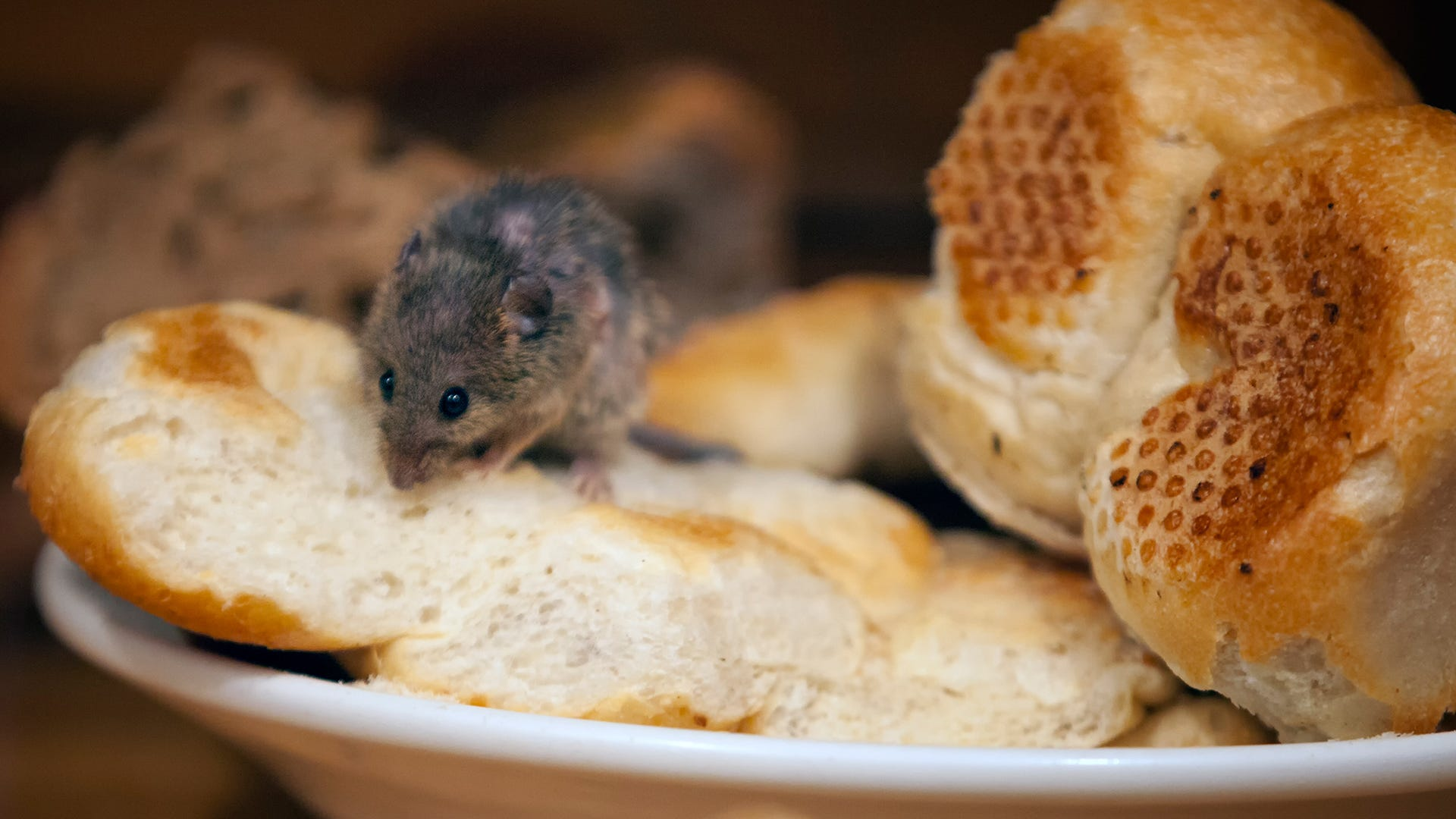 What Food Sources Attract Rodents?