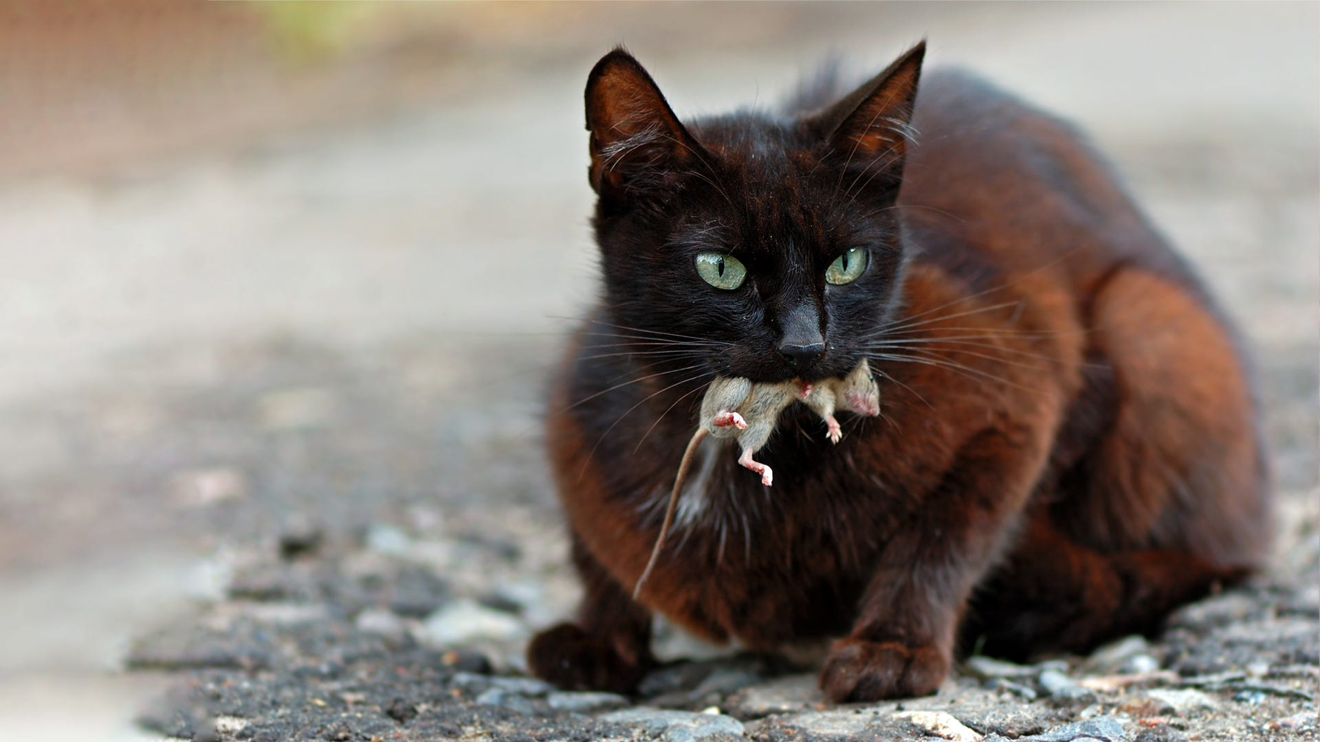 What to Do When Your Cat Brings You a 'Gift'