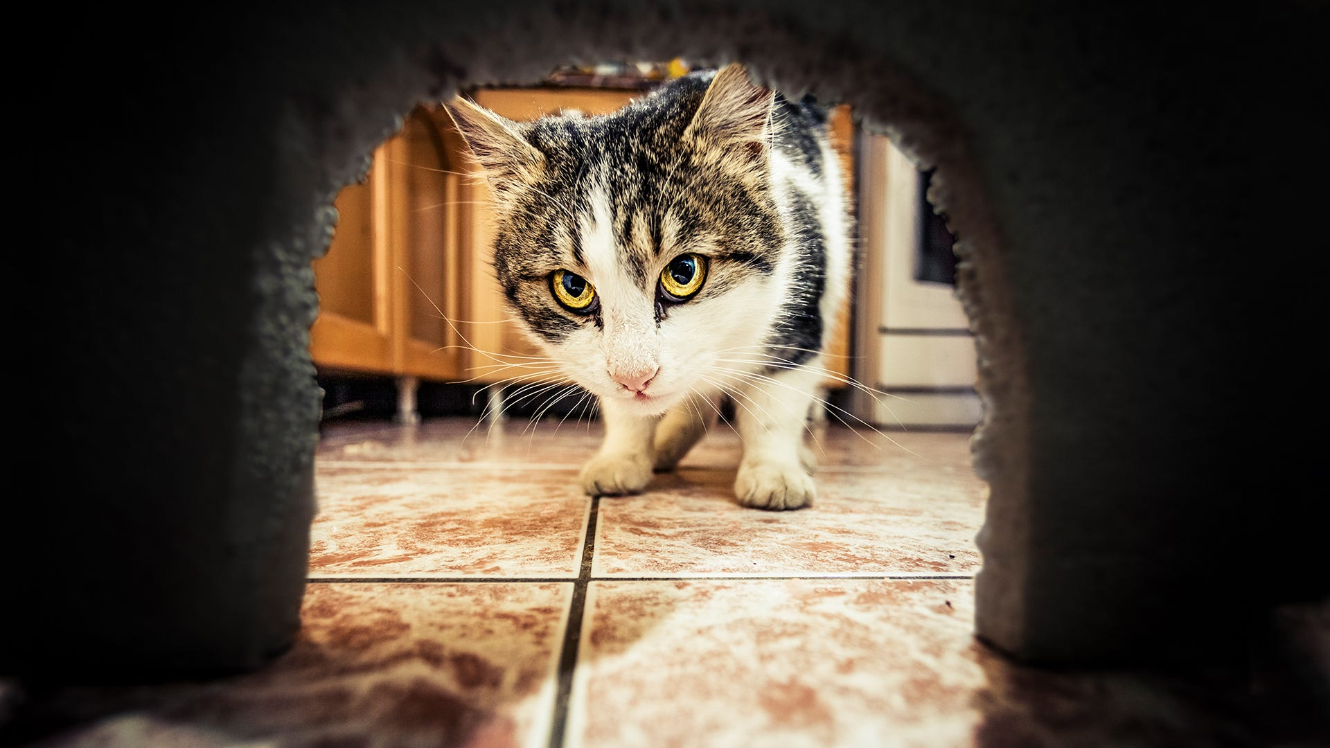 Will Getting a Cat Get Rid of Mice?