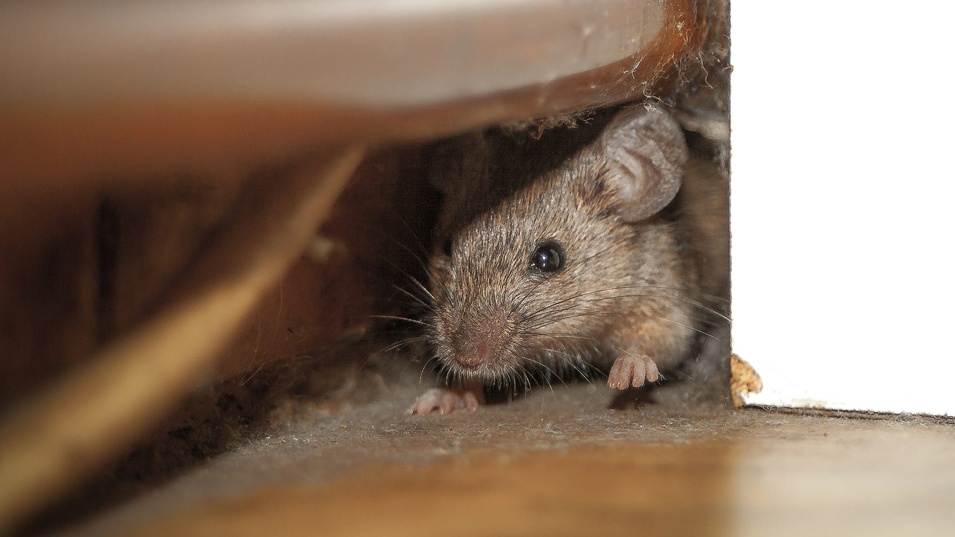 mouse in small space