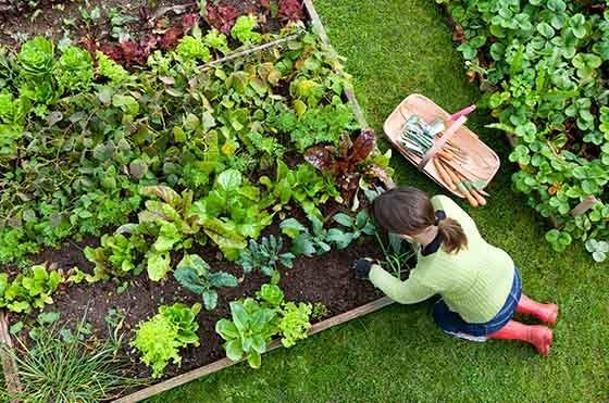 Raised Garden rodent prevention