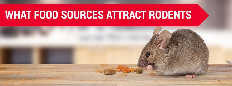 Rodent Food