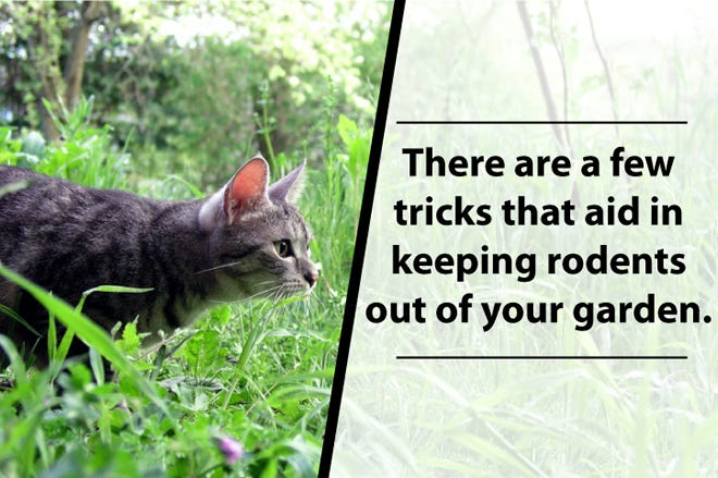 Tricks to Keep Rodents Out