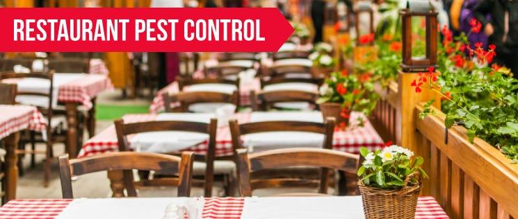Restaurant Pest Control 1