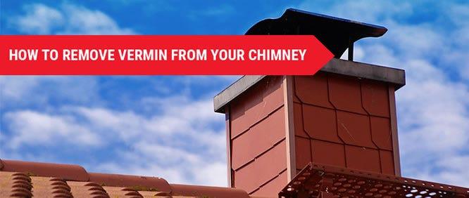 Vermin From Chimney 1