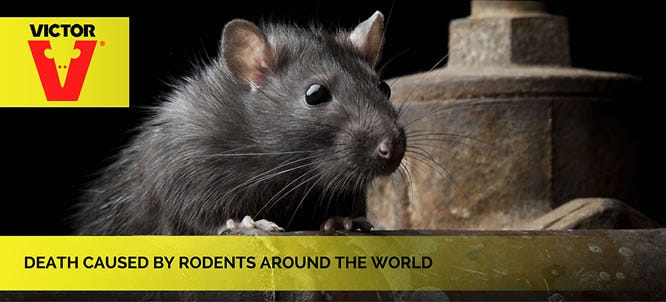 Deaths caused by Rodents