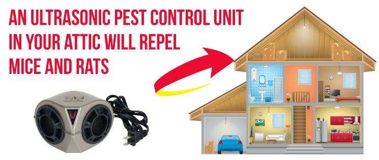 DIY Pest Control 2