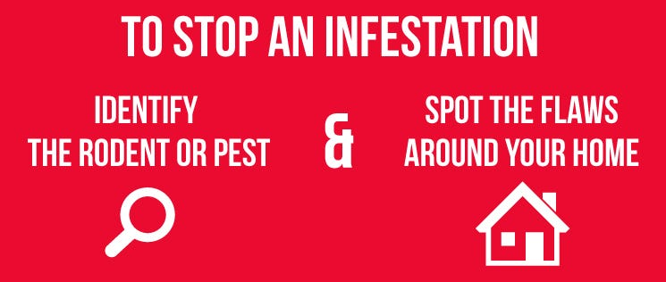 DIY Pest Control 3