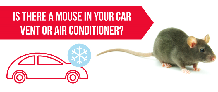 Is there a Mouse in your Car Vent or Air Conditioner?