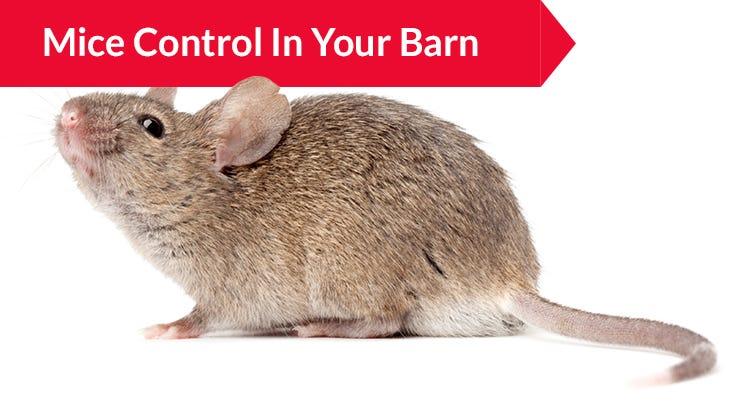 Mice Control in Your Barn