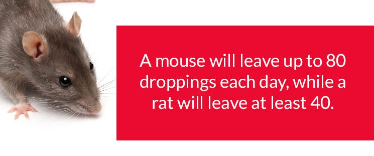Mouse Dropping Facts
