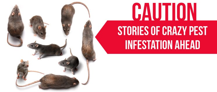 Rodent Infestation Stories 1