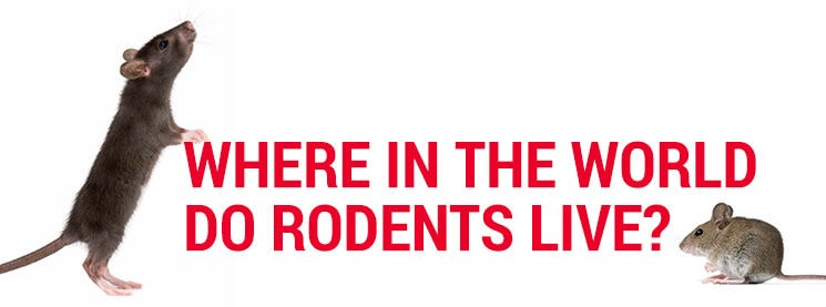 Where do Rodents live