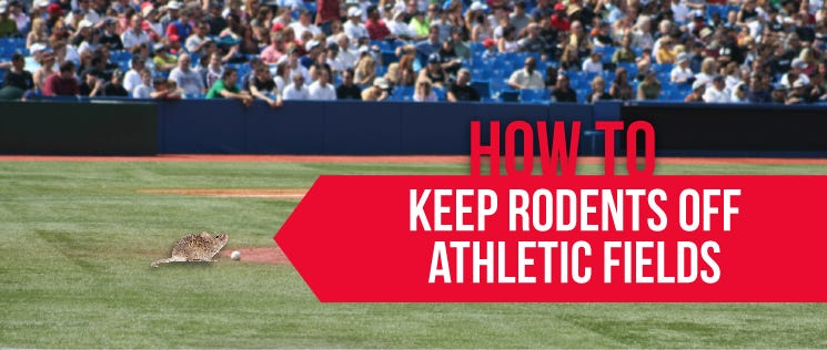 Keep Rodents off Athletic Fields