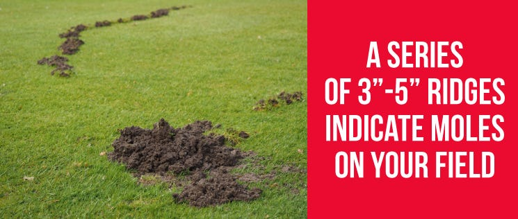 Moles on Your Field