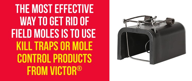 Get Rid of Moles With Victor Products