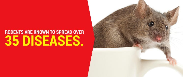 Rodents spread diseases