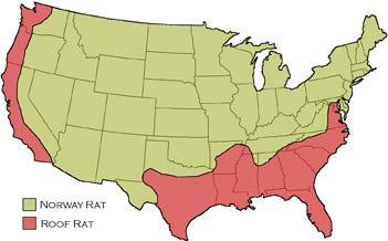 Rat Map