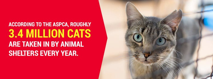 adopt a cat in an animal shelter