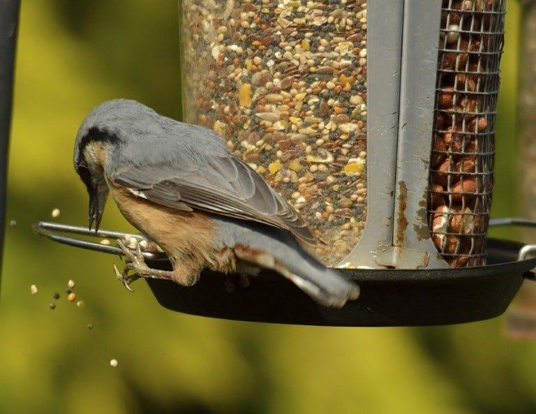 Victor Bird Feeder